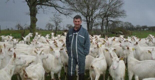 Fransk gedebonde omgivet af geder på mark